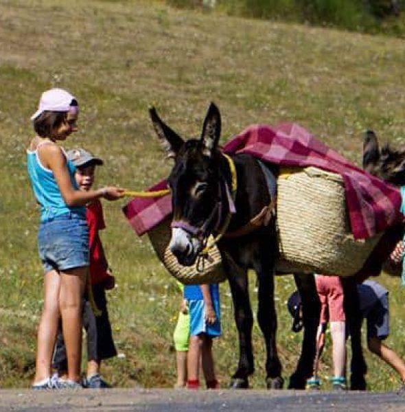 Colo Balad'ânes – 8-11 ans