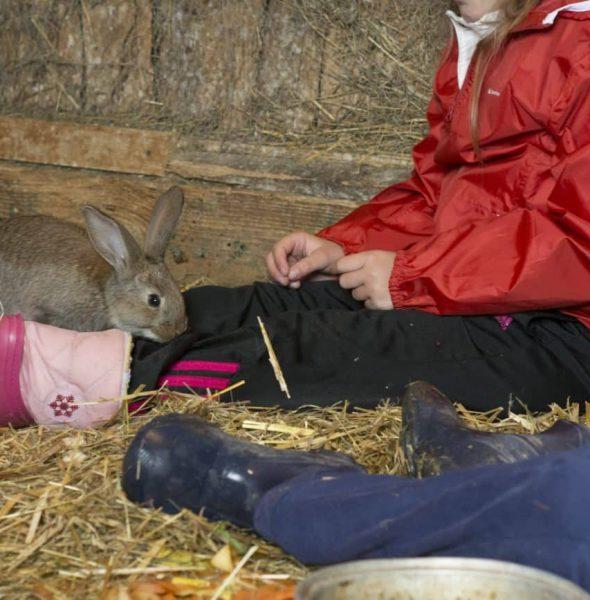 Camp d'enfants «Tout autour de la ferme» – 9/12 ans