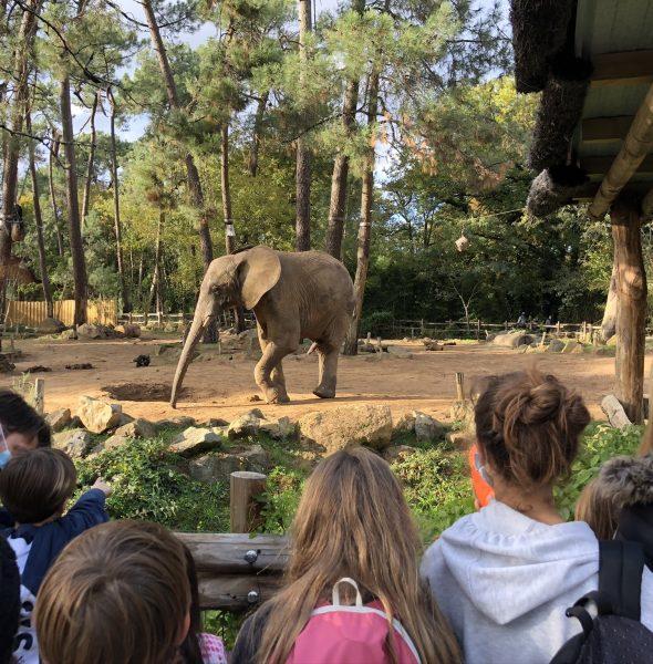 Colo  «Zoos en Folie», à la découverte de la faune. 6 à 12 ans