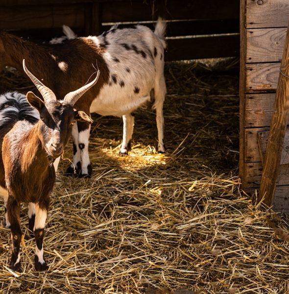 Séjour équitation et vie de la ferme – 6/16 ans